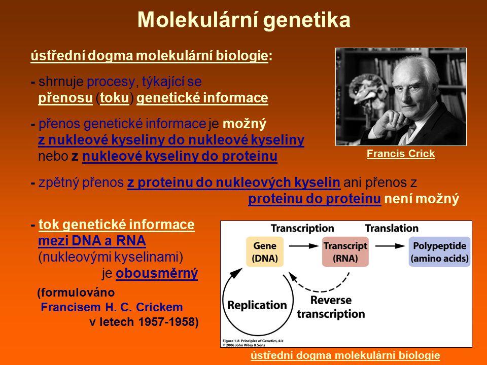 Molekulární genetika ústřední dogma molekulární biologie: - shrnuje procesy, týkající se přenosu (toku) genetické informace - přenos genetické informace je možný z nukleové kyseliny do nukleové kyseliny nebo z nukleové kyseliny do proteinu - zpětný přenos z proteinu do nukleových kyselin ani přenos z proteinu do proteinu není možný - tok genetické informace mezi DNA a RNA (nukleovými kyselinami) je obousměrný (formulováno Francisem H.
