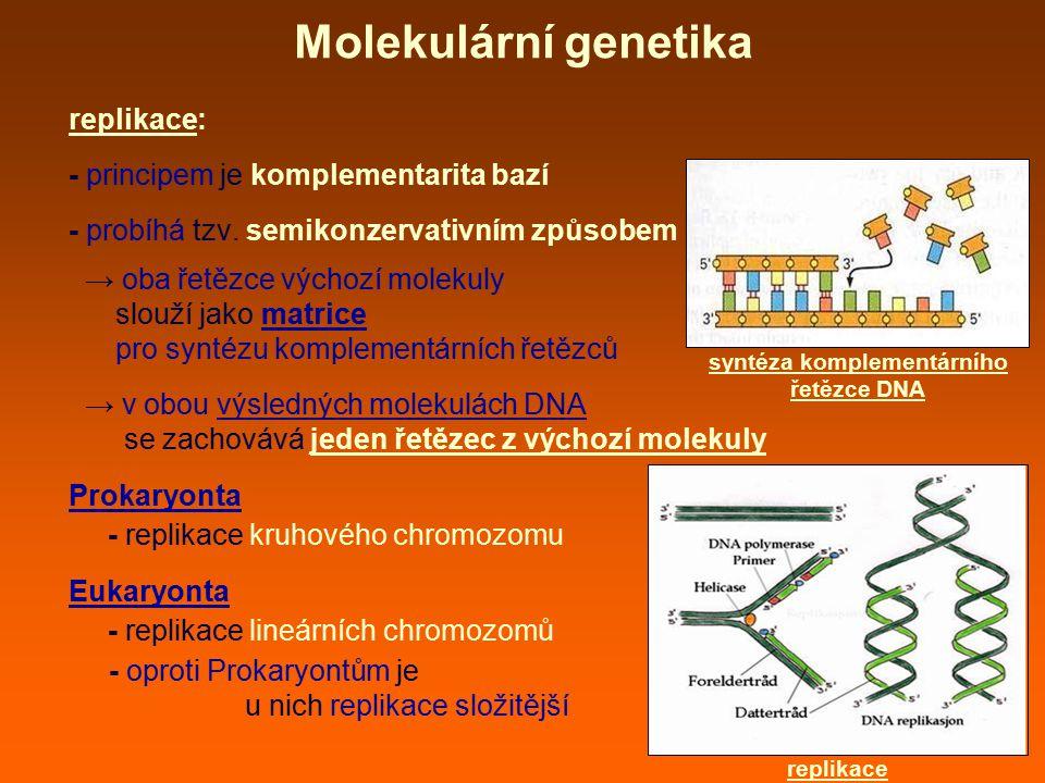 replikace: - principem je komplementarita bazí - probíhá tzv. semikonzervativním způsobem → oba řetězce výchozí molekuly slouží jako matrice pro synté