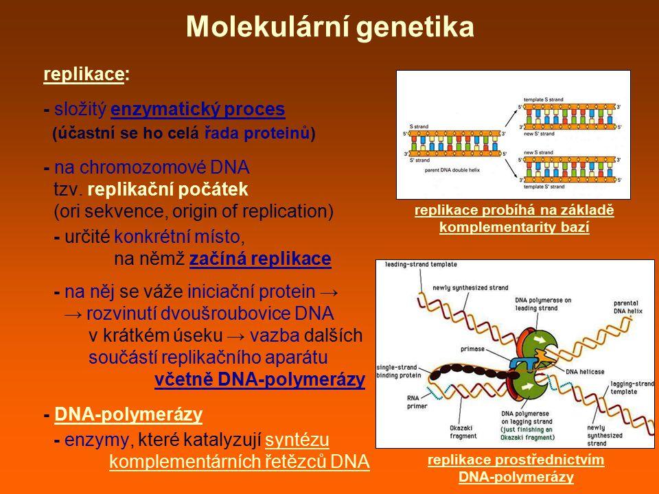 replikace: - složitý enzymatický proces (účastní se ho celá řada proteinů) - na chromozomové DNA tzv. replikační počátek (ori sekvence, origin of repl