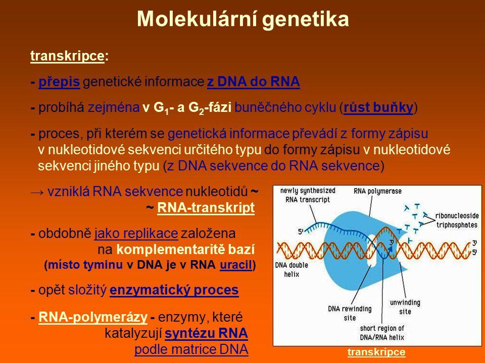 Molekulární genetika transkripce: - přepis genetické informace z DNA do RNA - probíhá zejména v G 1 - a G 2 -fázi buněčného cyklu (růst buňky) - proces, při kterém se genetická informace převádí z formy zápisu v nukleotidové sekvenci určitého typu do formy zápisu v nukleotidové sekvenci jiného typu (z DNA sekvence do RNA sekvence) → vzniklá RNA sekvence nukleotidů ~ ~ RNA-transkript - obdobně jako replikace založena na komplementaritě bazí (místo tyminu v DNA je v RNA uracil) - opět složitý enzymatický proces - RNA-polymerázy - enzymy, které katalyzují syntézu RNA podle matrice DNA transkripce
