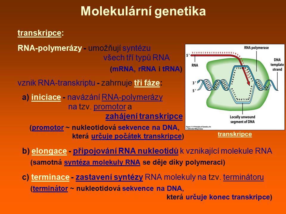 Molekulární genetika transkripce: RNA-polymerázy - umožňují syntézu všech tří typů RNA (mRNA, rRNA i tRNA) vznik RNA-transkriptu - zahrnuje tři fáze:
