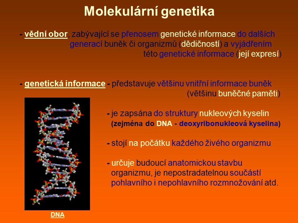 replikace: - zdvojení ~ tvorba kopií molekul DNA - zdvojení jaderné DNA probíhá v S-fázi buněčného cyklu → → vznik dceřiných molekul DNA - dceřiné molekuly DNA si zachovávají stejnou genetickou informaci jako původní molekula DNA (nemění se primární struktura DNA ~ ~ pořadí nukleotidů) → tyto replikované molekuly DNA (nacházející se v chromozomech) jsou následně během M-fáze rozděleny do dceřiných buněk tak, aby obě buňky získaly kompletní a stejnou genetickou informaci (chromozomovou sadu) Molekulární genetika replikace