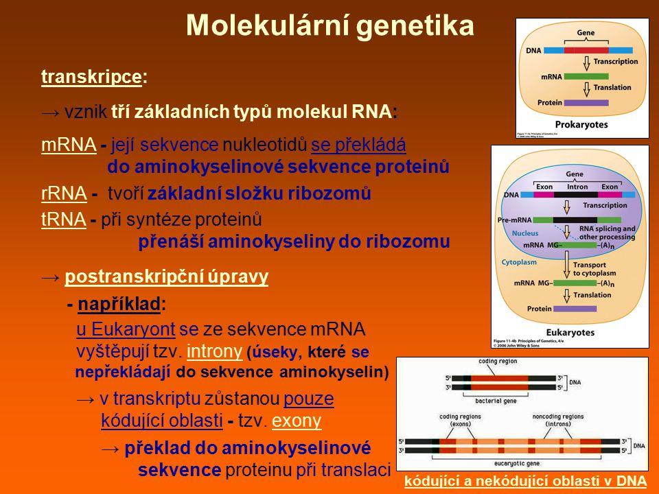 Molekulární genetika transkripce: → vznik tří základních typů molekul RNA: mRNA - její sekvence nukleotidů se překládá do aminokyselinové sekvence pro