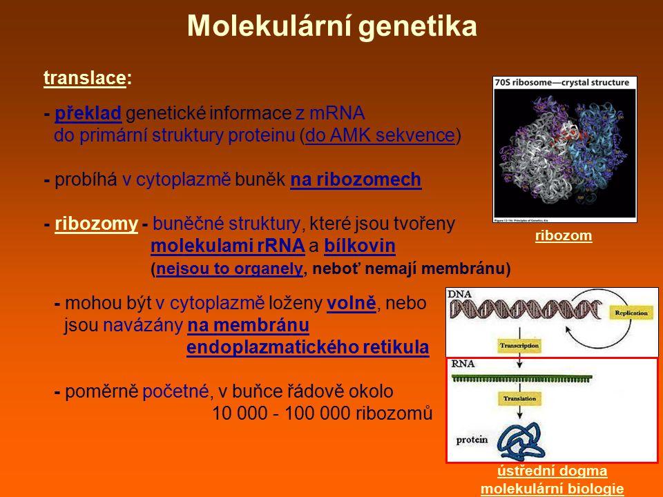 Molekulární genetika translace: - překlad genetické informace z mRNA do primární struktury proteinu (do AMK sekvence) - probíhá v cytoplazmě buněk na