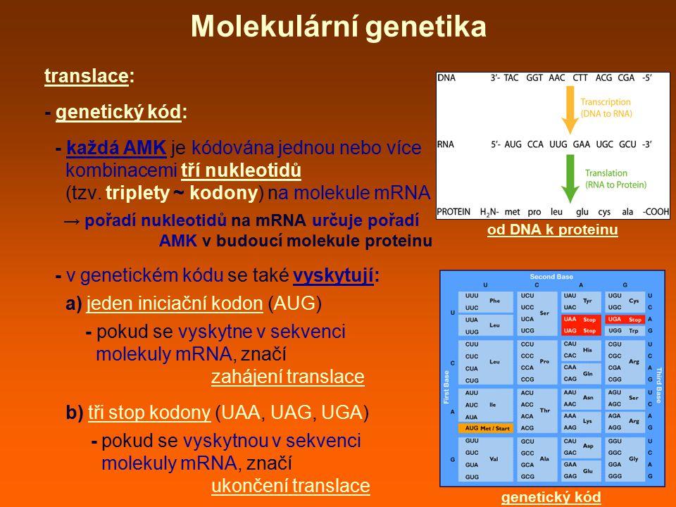 Molekulární genetika translace: - genetický kód: - každá AMK je kódována jednou nebo více kombinacemi tří nukleotidů (tzv. triplety ~ kodony) na molek