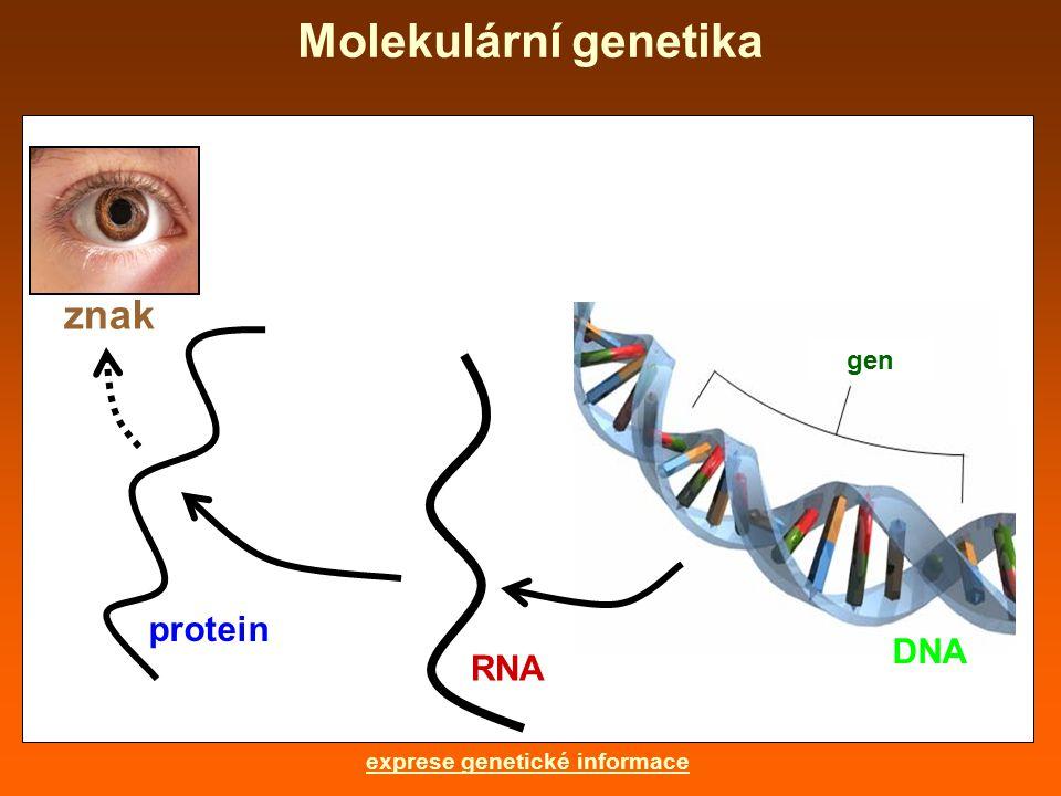 Molekulární genetika gen DNA RNA protein znak exprese genetické informace