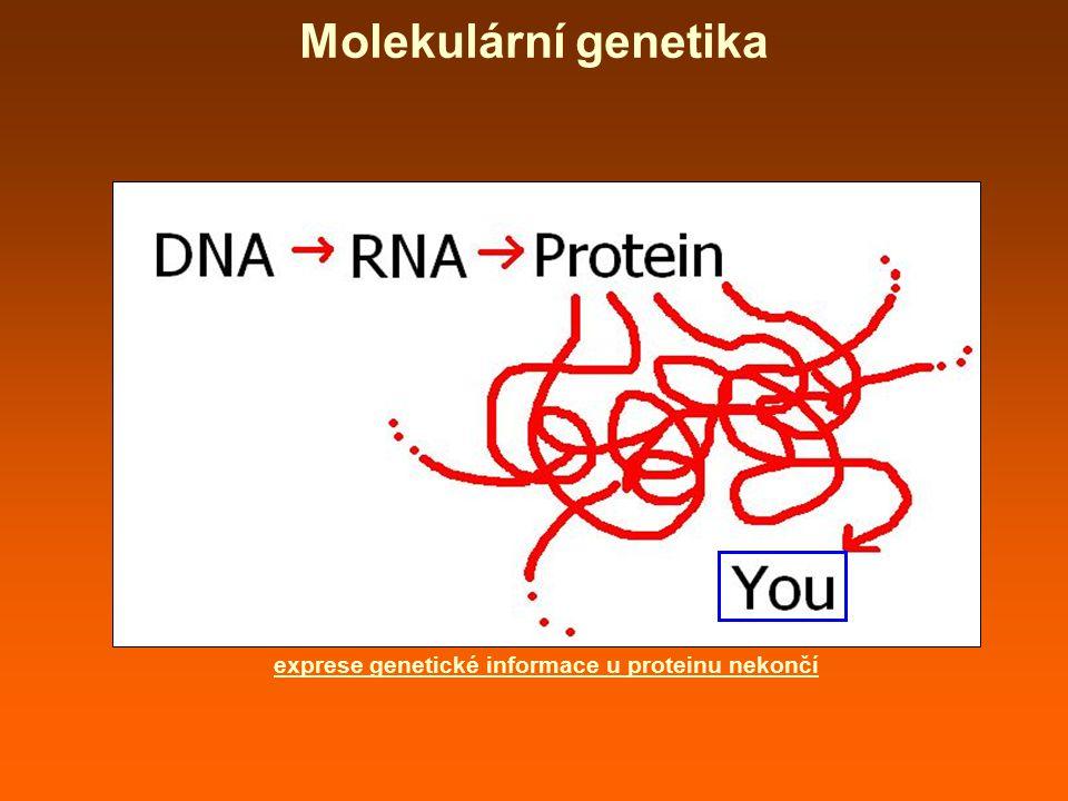 exprese genetické informace u proteinu nekončí Molekulární genetika