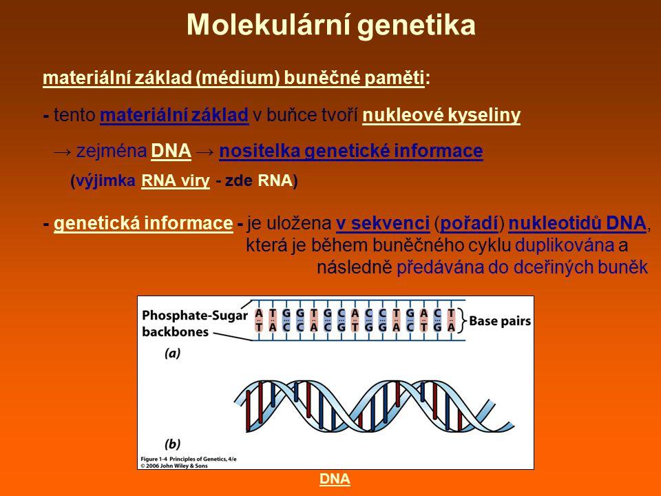 Molekulární genetika materiální základ (médium) buněčné paměti: - tento materiální základ v buňce tvoří nukleové kyseliny → zejména DNA → nositelka ge