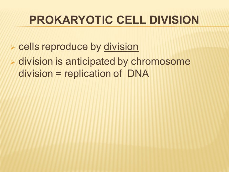  cells reproduce by division  division is anticipated by chromosome division = replication of DNA PROKARYOTIC CELL DIVISION
