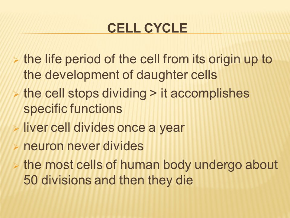 CELL CYCLE  the life period of the cell from its origin up to the development of daughter cells  the cell stops dividing > it accomplishes specific functions  liver cell divides once a year  neuron never divides  the most cells of human body undergo about 50 divisions and then they die