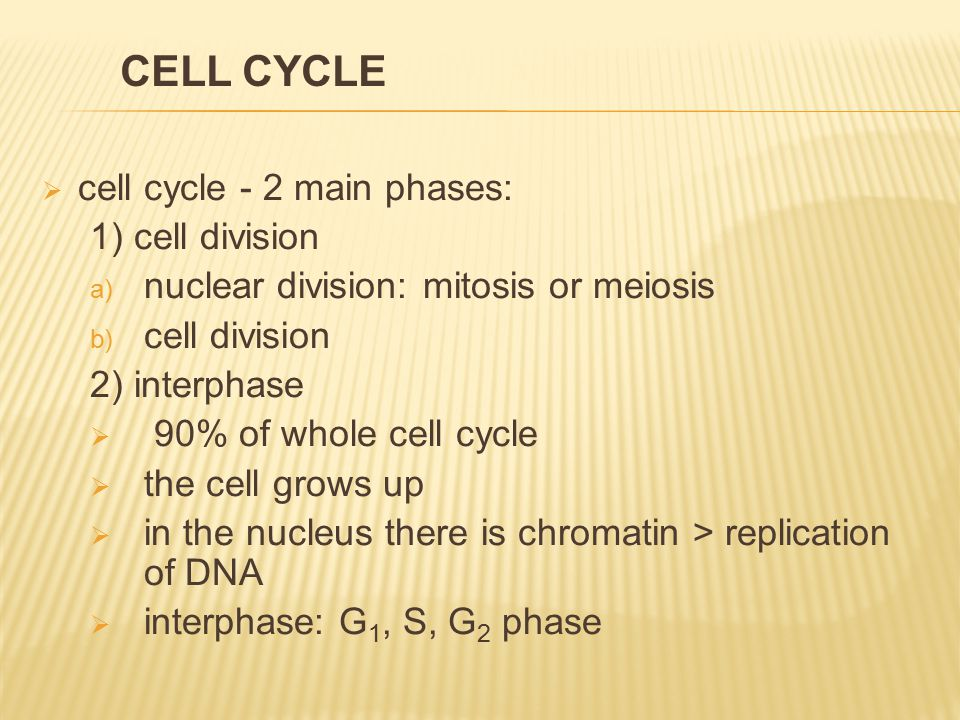  cell cycle - 2 main phases: 1) cell division a) nuclear division: mitosis or meiosis b) cell division 2) interphase  90% of whole cell cycle  the cell grows up  in the nucleus there is chromatin > replication of DNA  interphase: G 1, S, G 2 phase CELL CYCLE