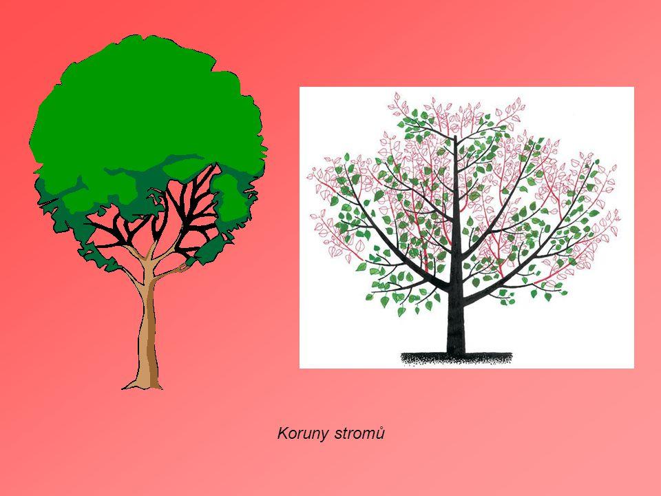 Stromy - listnaté jehličnaté ovocné stromy Listnaté stromy Lípa Jírovec Maďal (Kaštan)