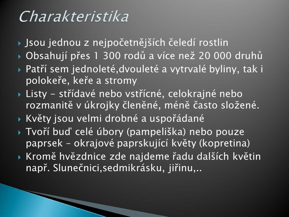  Pampeliška  Slunečnice  Kopretina  Sedmikráska  Gerbera