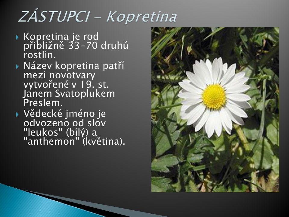  Kopretina je rod přibližně 33-70 druhů rostlin.
