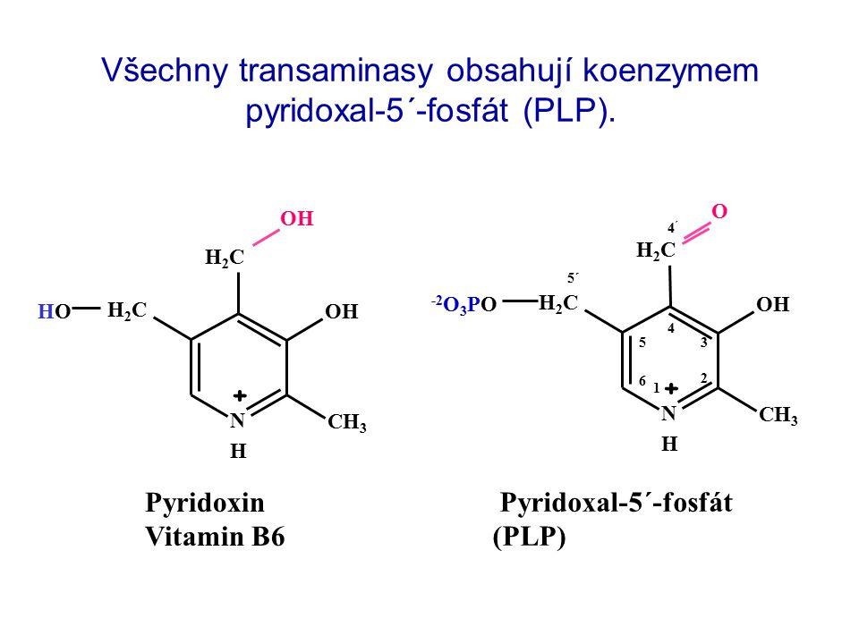 N H + CH3CH3 OHOH H2CH2C H2CH2C HOHO OH Pyridoxin Vitamin B6 N H + CH3CH3 OHOH H2CH2C H2CH2C O -2 O 3 PO 1 2 3 4 5 6 4´4´ 5´ Pyridoxal-5´-fosfát (PLP) Všechny transaminasy obsahují koenzymem pyridoxal-5´-fosfát (PLP).