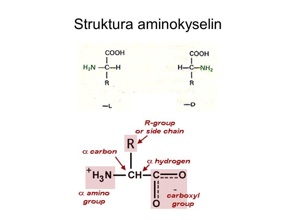 Struktura aminokyselin