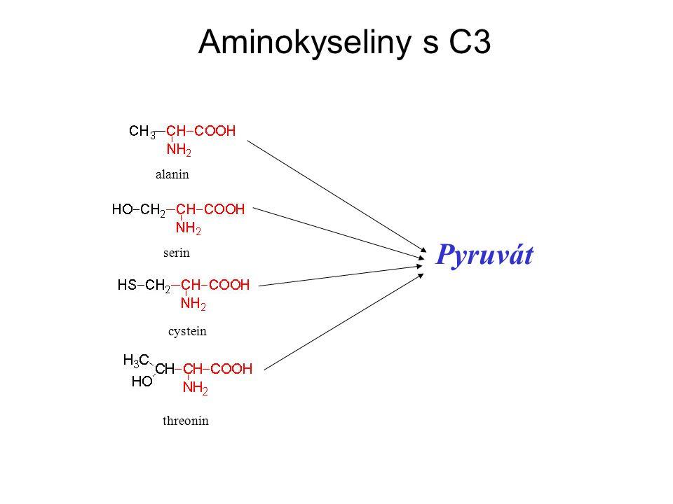 alanin serin cystein threonin Aminokyseliny s C3 Pyruvát