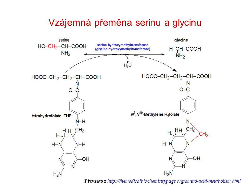 Vzájemná přeměna serinu a glycinu Převzato z http://themedicalbiochemistrypage.org/amino-acid-metabolism.html