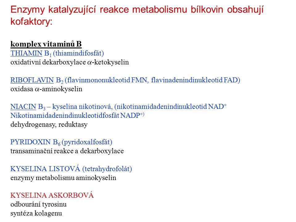 Enzymy katalyzující reakce metabolismu bílkovin obsahují kofaktory: komplex vitaminů B THIAMIN B 1 (thiamindifosfát) oxidativní dekarboxylace  -ketokyselin RIBOFLAVIN B 2 (flavinmononukleotid FMN, flavinadenindinukleotid FAD) oxidasa  -aminokyselin NIACIN B 3 – kyselina nikotinová, (nikotinamidadenindinukleotid NAD + Nikotinamidadenindinukleotidfosfát NADP +) dehydrogenasy, reduktasy PYRIDOXIN B 6 (pyridoxalfosfát) transaminační reakce a dekarboxylace KYSELINA LISTOVÁ (tetrahydrofolát) enzymy metabolismu aminokyselin KYSELINA ASKORBOVÁ odbourání tyrosinu syntéza kolagenu