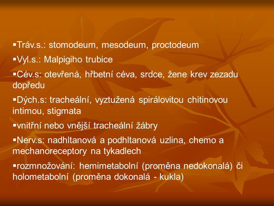  Tráv.s.: stomodeum, mesodeum, proctodeum  Vyl.s.: Malpigiho trubice  Cév.s: otevřená, hřbetní céva, srdce, žene krev zezadu dopředu  Dých.s: tracheální, vyztužená spirálovitou chitinovou intimou, stigmata  vnitřní nebo vnější tracheální žábry  Nerv.s: nadhltanová a podhltanová uzlina, chemo a mechanoreceptory na tykadlech  rozmnožování: hemimetabolní (proměna nedokonalá) či holometabolní (proměna dokonalá - kukla)