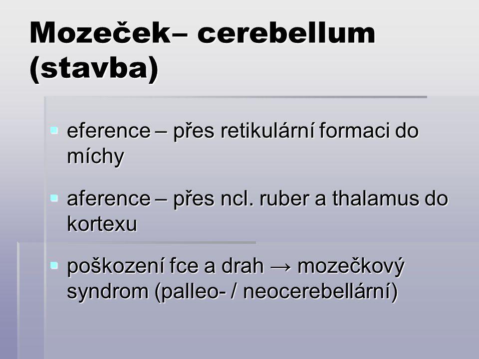 Mozeček– cerebellum (stavba)  eference – přes retikulární formaci do míchy  aference – přes ncl. ruber a thalamus do kortexu  poškození fce a drah