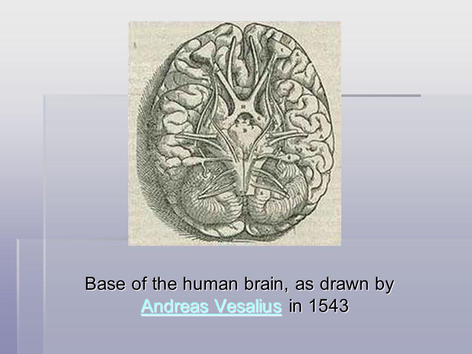 Mozeček– cerebellum (stavba)  archicerebellum – anatomicky i funkčně spojeno s vestibulárními jádry  palleocerebellum – spojeno s míchou  neocerebellum – spojeno s mozkovými hemisférami Cerebellum and surrounding regions; sagittal view of one hemisphere.