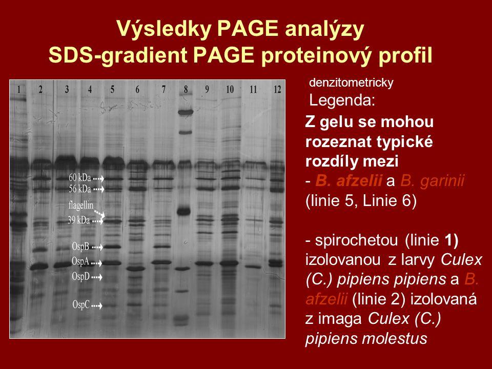 Výsledky PAGE analýzy SDS-gradient PAGE proteinový profil Z gelu se mohou rozeznat typické rozdíly mezi - B. afzelii a B. garinii (linie 5, Linie 6) -