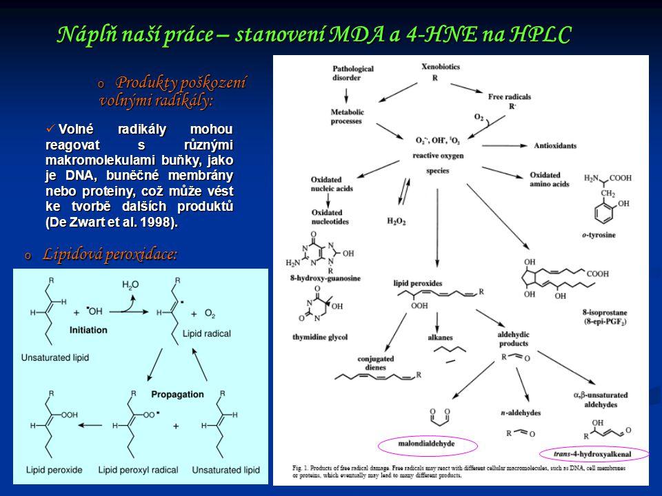 Náplň naší práce – stanovení MDA a 4-HNE na HPLC o Produkty poškození volnými radikály: Volné radikály mohou reagovat s různými makromolekulami buňky,