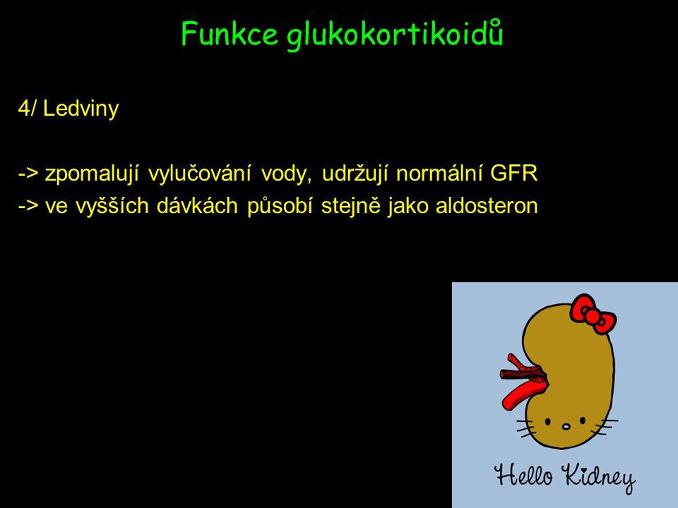Funkce glukokortikoidů 4/ Ledviny -> zpomalují vylučování vody, udržují normální GFR -> ve vyšších dávkách působí stejně jako aldosteron