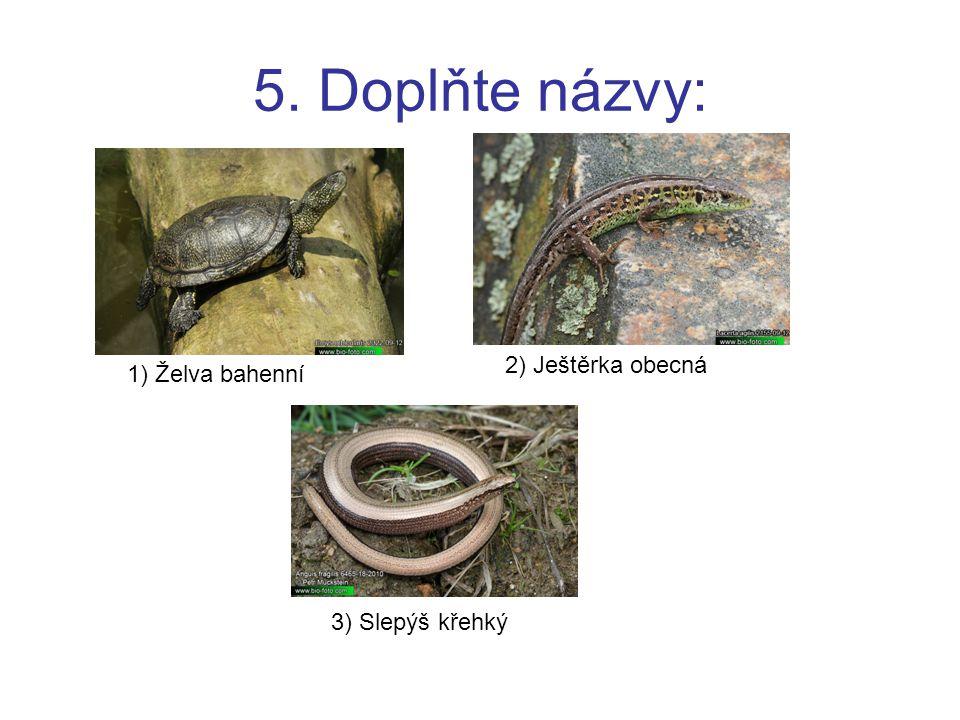 5. Doplňte názvy: 1) Želva bahenní 2) Ještěrka obecná 3) Slepýš křehký