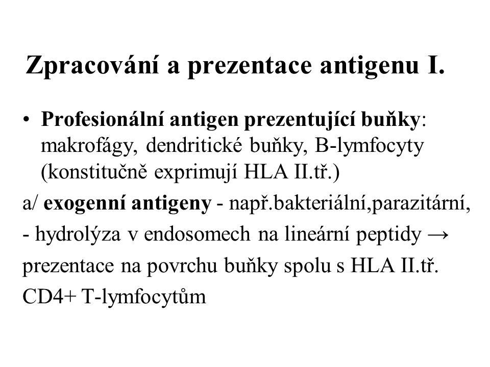Zpracování a prezentace antigenu I. Profesionální antigen prezentující buňky: makrofágy, dendritické buňky, B-lymfocyty (konstitučně exprimují HLA II.