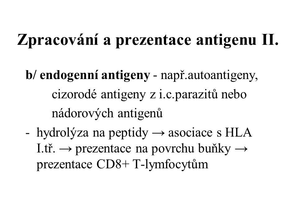Zpracování a prezentace antigenu II. b/ endogenní antigeny - např.autoantigeny, cizorodé antigeny z i.c.parazitů nebo nádorových antigenů -hydrolýza n