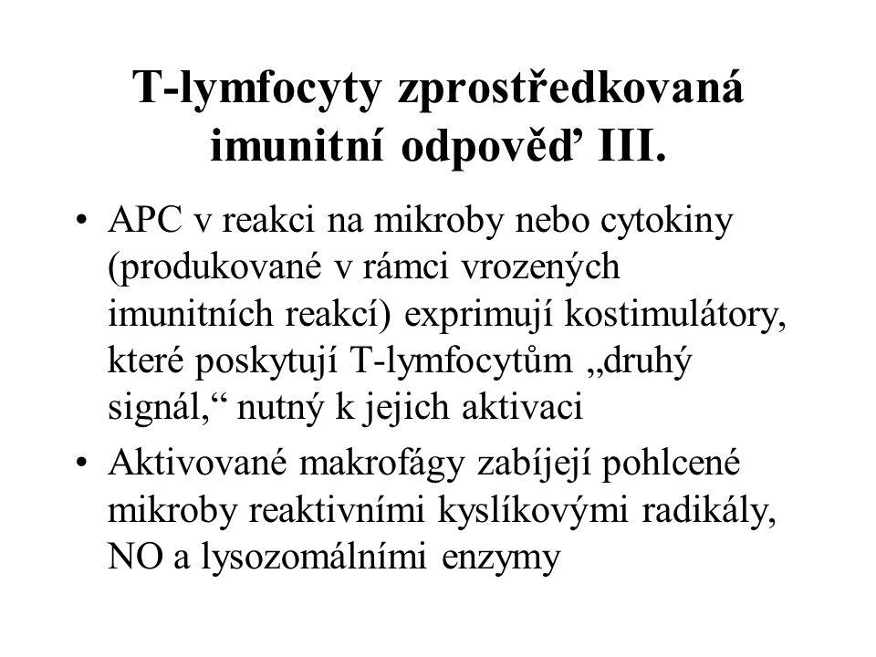 T-lymfocyty zprostředkovaná imunitní odpověď III. APC v reakci na mikroby nebo cytokiny (produkované v rámci vrozených imunitních reakcí) exprimují ko