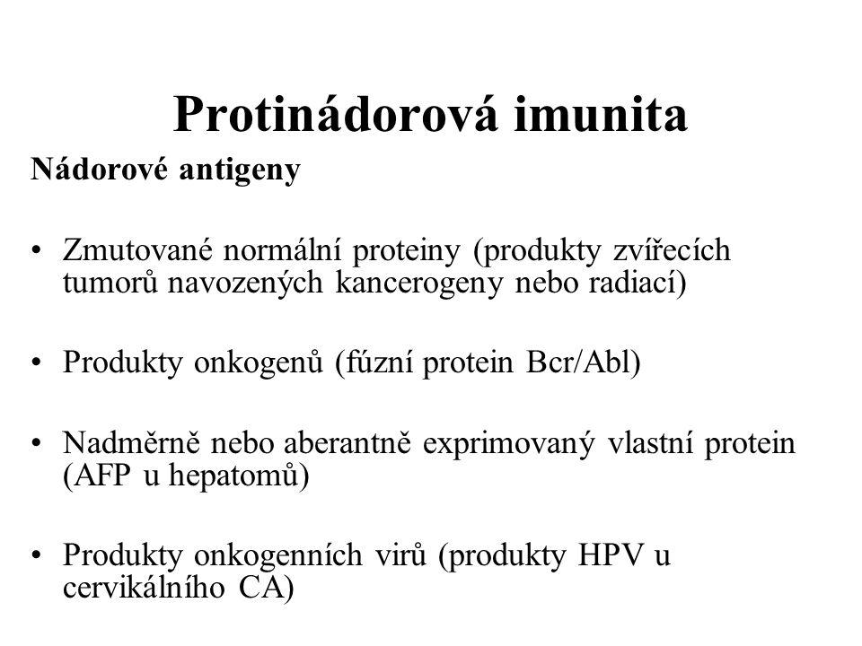 Protinádorová imunita Nádorové antigeny Zmutované normální proteiny (produkty zvířecích tumorů navozených kancerogeny nebo radiací) Produkty onkogenů (fúzní protein Bcr/Abl) Nadměrně nebo aberantně exprimovaný vlastní protein (AFP u hepatomů) Produkty onkogenních virů (produkty HPV u cervikálního CA)