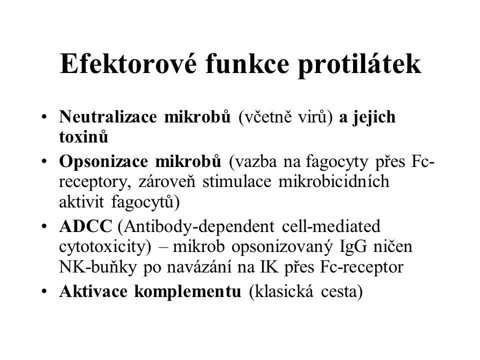 Efektorové funkce protilátek Neutralizace mikrobů (včetně virů) a jejich toxinů Opsonizace mikrobů (vazba na fagocyty přes Fc- receptory, zároveň stimulace mikrobicidních aktivit fagocytů) ADCC (Antibody-dependent cell-mediated cytotoxicity) – mikrob opsonizovaný IgG ničen NK-buňky po navázání na IK přes Fc-receptor Aktivace komplementu (klasická cesta)