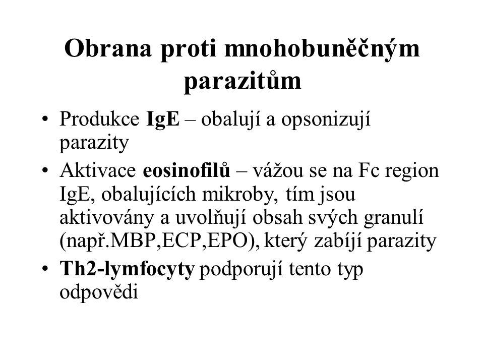 Obrana proti mnohobuněčným parazitům Produkce IgE – obalují a opsonizují parazity Aktivace eosinofilů – vážou se na Fc region IgE, obalujících mikroby, tím jsou aktivovány a uvolňují obsah svých granulí (např.MBP,ECP,EPO), který zabíjí parazity Th2-lymfocyty podporují tento typ odpovědi