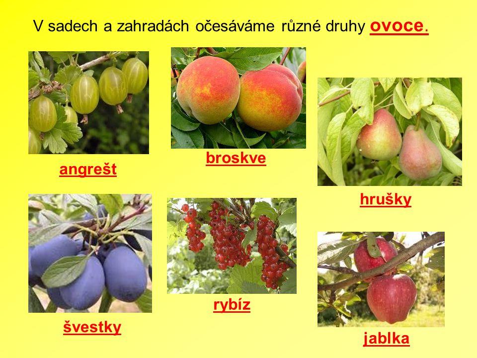 V sadech a zahradách očesáváme různé druhy ovoce. broskve rybíz angrešt jablka hrušky švestky