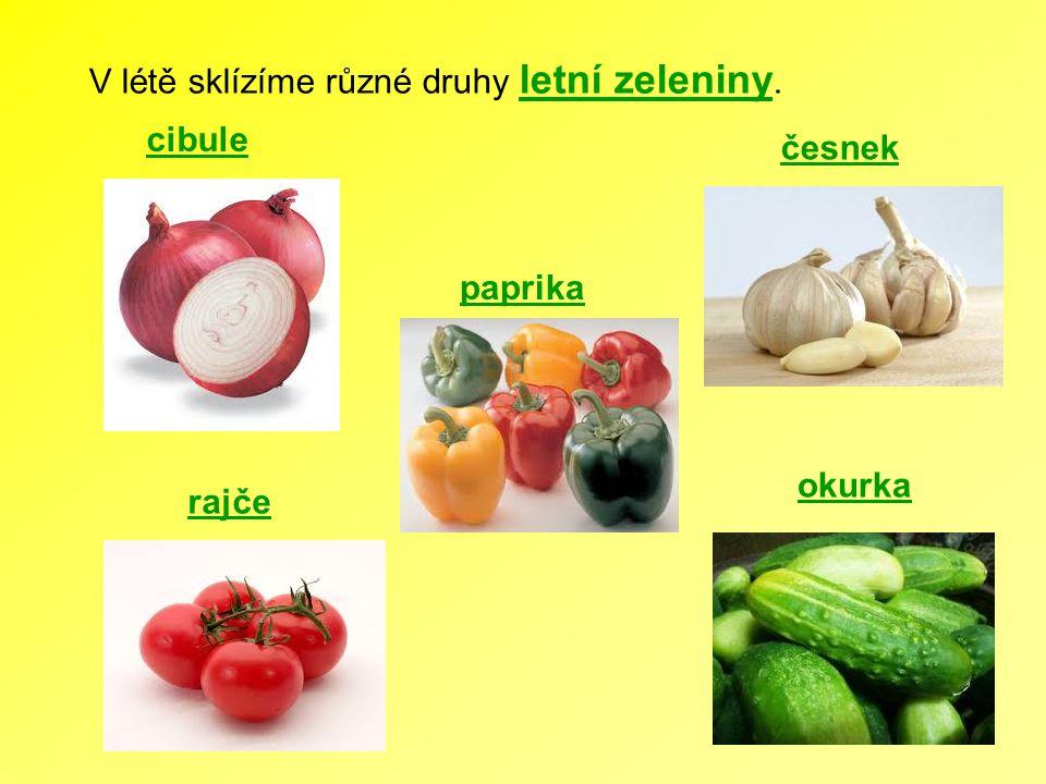 V létě sklízíme různé druhy letní zeleniny. cibule česnek rajče paprika okurka