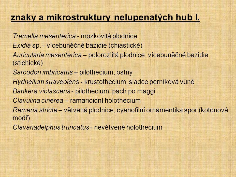 Tremella mesenterica - mozkovitá plodnice Exidia sp. - vícebuněčné bazidie (chiastické) Auricularia mesenterica – polorozlitá plodnice, vícebuněčné ba
