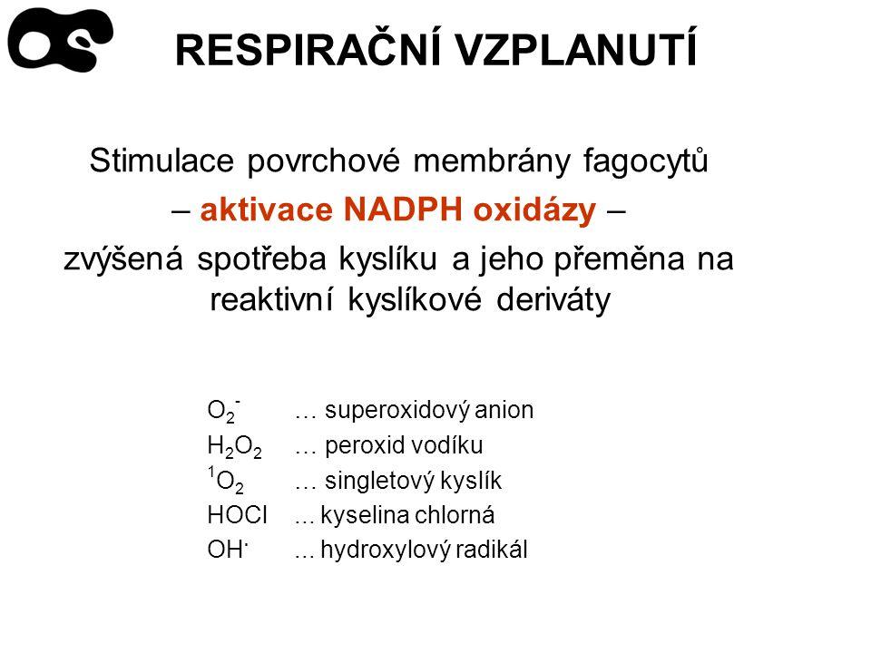 RESPIRAČNÍ VZPLANUTÍ Stimulace povrchové membrány fagocytů – aktivace NADPH oxidázy – zvýšená spotřeba kyslíku a jeho přeměna na reaktivní kyslíkové deriváty O 2 - … superoxidový anion H 2 O 2 … peroxid vodíku 1 O 2 … singletový kyslík HOCl...