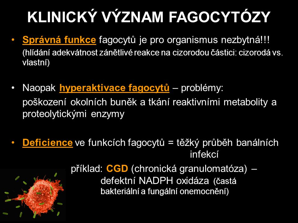 Správná funkce fagocytů je pro organismus nezbytná!!! (hlídání adekvátnost zánětlivé reakce na cizorodou částici: cizorodá vs. vlastní) Naopak hyperak