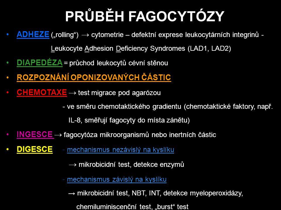 """PRŮBĚH FAGOCYTÓZY ADHEZE (""""rolling ) → cytometrie – defektní exprese leukocytárních integrinů - Leukocyte Adhesion Deficiency Syndromes (LAD1, LAD2) DIAPEDÉZA = průchod leukocytů cévní stěnou ROZPOZNÁNÍ OPONIZOVANÝCH ČÁSTIC CHEMOTAXE → test migrace pod agarózou - ve směru chemotaktického gradientu (chemotaktické faktory, např."""