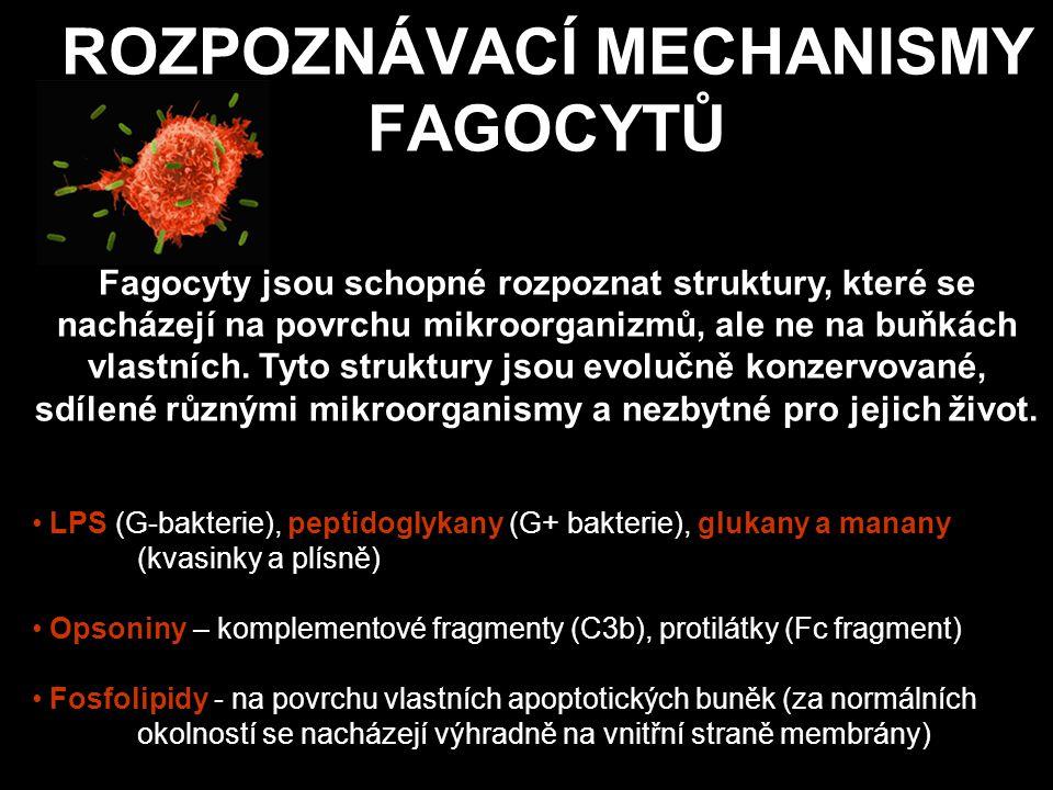 PRO ROZPOZNÁNÍ RŮZNÉ DRUHY RECEPTORŮ Pro rozpoznání charakteristických mikrobiálních nebo apoptotických komponent slouží fagocytům různé druhy receptorů: manózové receptory rozeznávající cukerné struktury na povrchu bakterií a některých virů scavengerové receptory – rozeznávají acetylované LDL chemotaktické receptory (fMLP) Toll-like receptory komplementové receptory Fc receptory