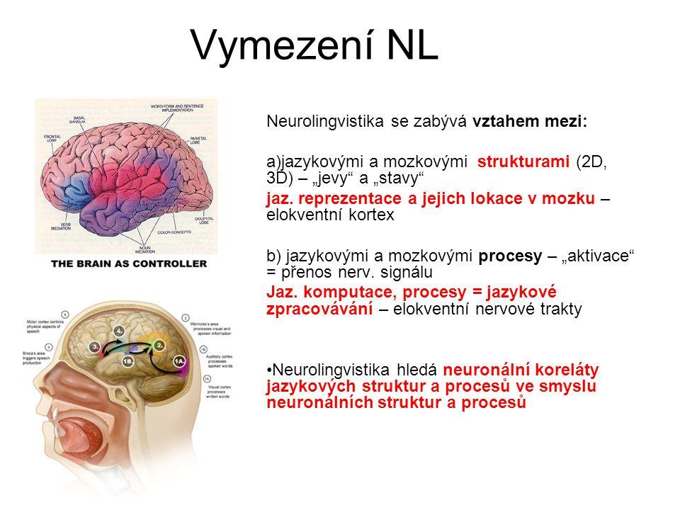 """Vymezení NL Neurolingvistika se zabývá vztahem mezi: a)jazykovými a mozkovými strukturami (2D, 3D) – """"jevy"""" a """"stavy"""" jaz. reprezentace a jejich lokac"""
