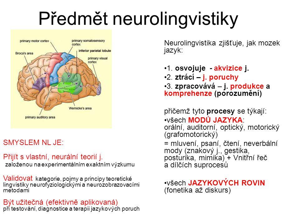 Předmět neurolingvistiky Neurolingvistika zjišťuje, jak mozek jazyk: 1. osvojuje - akvizice j. 2. ztrácí – j. poruchy 3. zpracovává – j. produkce a ko