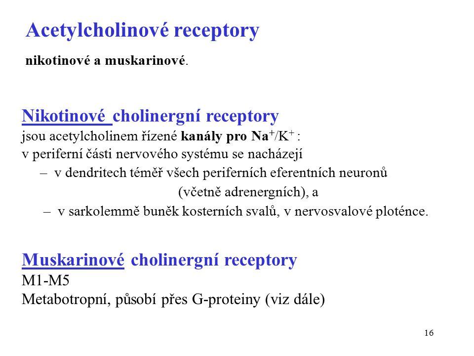 16 Nikotinové cholinergní receptory jsou acetylcholinem řízené kanály pro Na + /K + : v periferní části nervového systému se nacházejí – v dendritech téměř všech periferních eferentních neuronů (včetně adrenergních), a – v sarkolemmě buněk kosterních svalů, v nervosvalové ploténce.