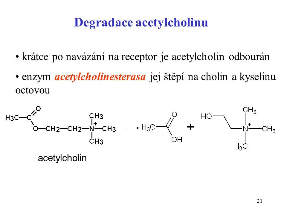 21 Degradace acetylcholinu krátce po navázání na receptor je acetylcholin odbourán enzym acetylcholinesterasa jej štěpí na cholin a kyselinu octovou acetylcholin