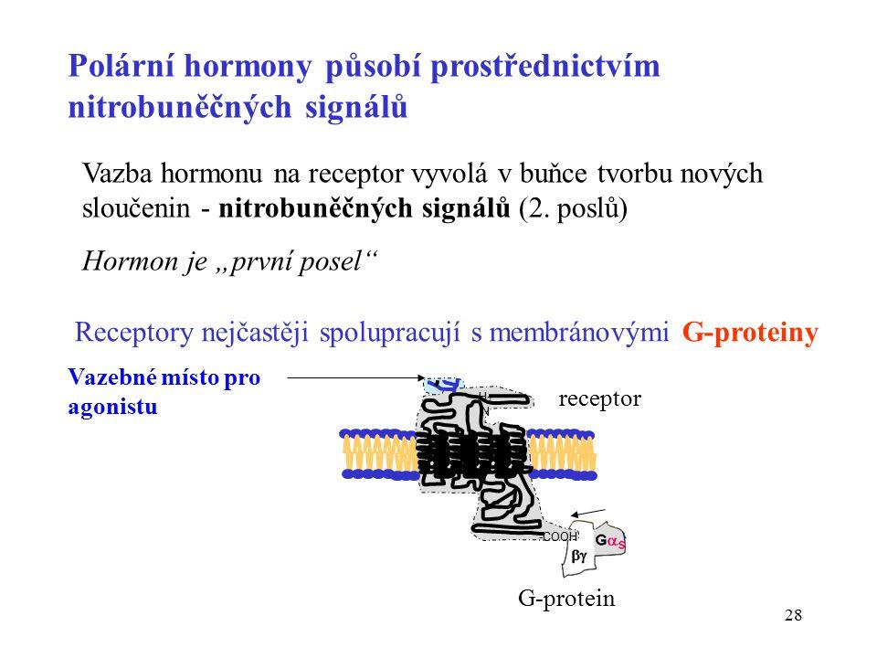 28 Polární hormony působí prostřednictvím nitrobuněčných signálů Vazba hormonu na receptor vyvolá v buňce tvorbu nových sloučenin - nitrobuněčných signálů (2.