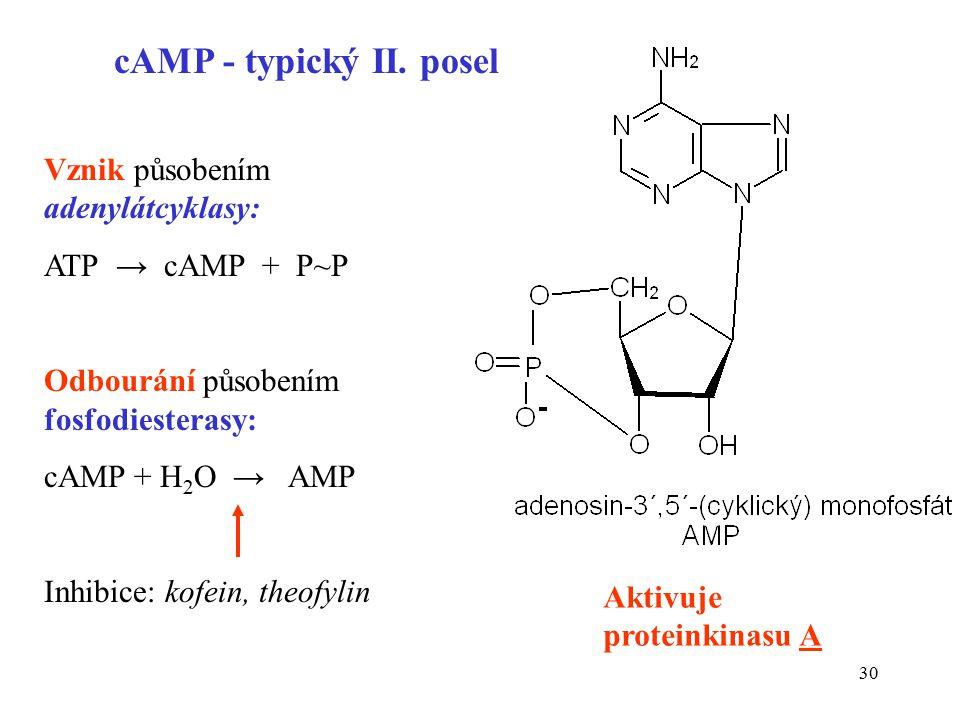 31 Vybrané typy G-proteinů Typ podjednotky G  Příklady aktivujícího receptoru Účinek aktivovaného G  na cílový protein G  s (stimulační) glukagon parathyrin  -adrenergní stimulace adenylátcyklázy G  i (inhibiční) somatostatin  2 -adrenergní Acetylcholin M 2,M 4 inhibice adenylátcyklázy G  q (aktivující PI kaskádu) vazopresinový V1 endotelinové ETA,B acetylcholinový M 1, M 3  1 -adrenergní stimulace fosfolipázy C