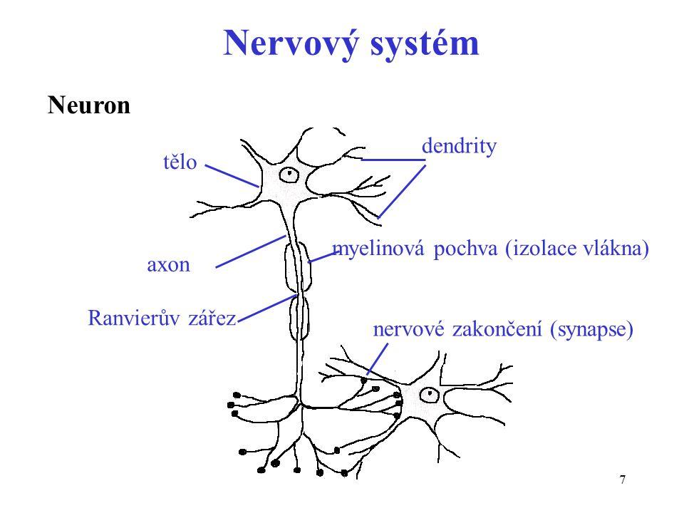 7 Neuron tělo dendrity axon Ranvierův zářez nervové zakončení (synapse) Nervový systém myelinová pochva (izolace vlákna)